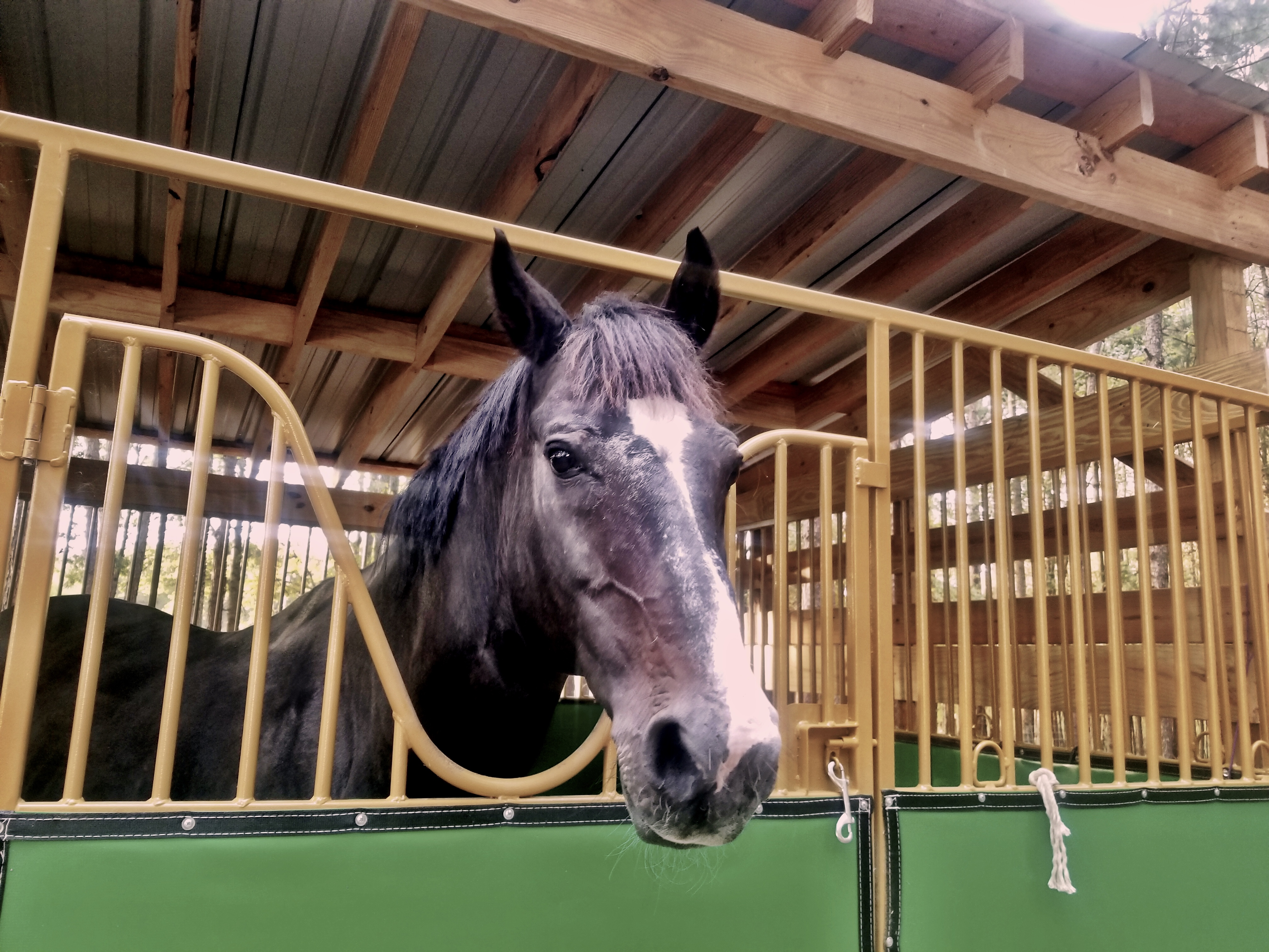 What Is The Correct Size Horse Stall American Stalls
